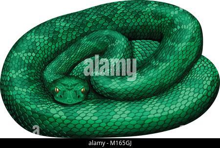 Rattlesnake on white background illustration Stock Vector Image & Art -  Alamy