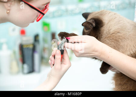 the vet cut the cats claws, white background - Stock Photo