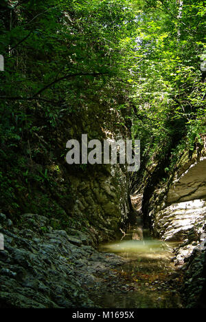 A narrow shady stone canyon of a stream in a tropical forest, with sunlight breaking through dense foliage - Stock Photo