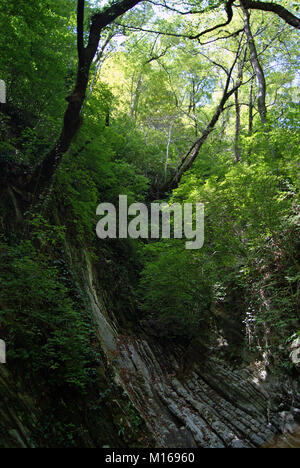 The wall of narrow shady stone canyon in a tropical forest, with sunlight breaking through dense foliage - Stock Photo