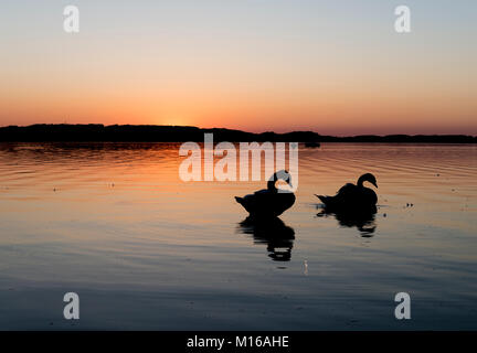 Sunset at the Chiemsee, silhouettes of two swans, near Prien, Bavaria, Germany - Stock Photo
