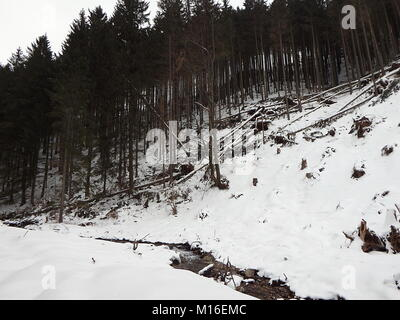 Destroyed forest in the winter, Destroyed forest as an effect of strong storm, - Stock Photo