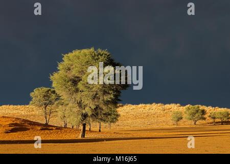 Desert landscape against a dark sky of an approaching storm, Kalahari desert, South Africa - Stock Photo