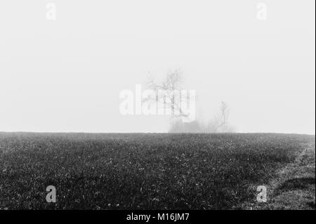 Isolated tree in a misty weather, Monochrome, Luxembourg - Stock Photo