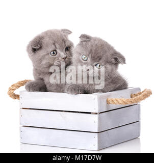 Cat, pet, and cute concept - couple of cute cats in a wooden box. A true friends on white background - Stock Photo