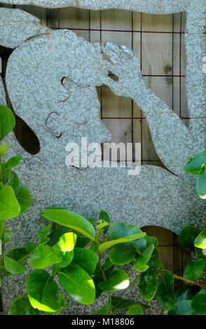 A panel of galvanised sheet metal, with NZ broadleaf Griselinia littoralis (kapuka),  trained to surround the panel. - Stock Photo