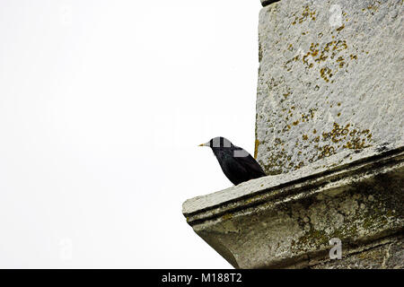 Spotless starling Sturnus unicolor perched on old building near the Etang de Bigulia Corsica France - Stock Photo