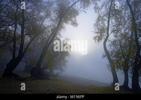 Sunrise in thick autumn fog over the river.View from the old willow forests.Silence and mysticism - Stock Photo