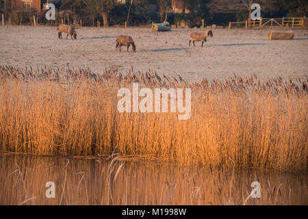 A frosty morning in Amberley  West Sussex - Stock Photo