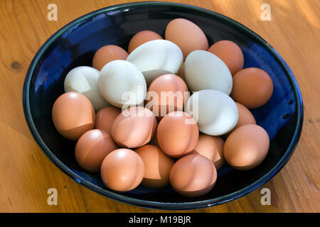 A collection of fresh free range duck and chicken eggs in a dish in morning sunlight. Shallow depth of field. - Stock Photo