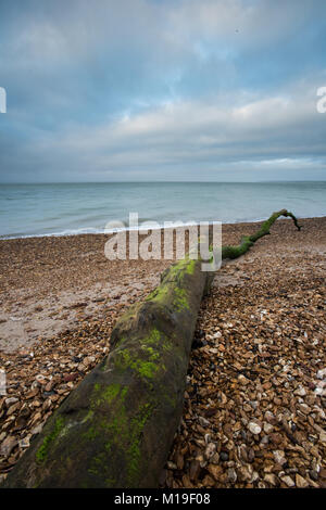 A large interesting atmospheric piece of driftwood wash up on a beach with shingle and stones, cloudy sky in moody - Stock Photo