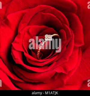 Sparkling engagement ring inside red rose. Romantic gift for valentines day. Marriage proposal concept - Stock Photo