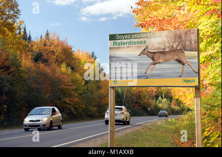 Roadside sign in French warning drivers about the danger of collision with wild animals crossing the road.  Mt Tremblant, - Stock Photo