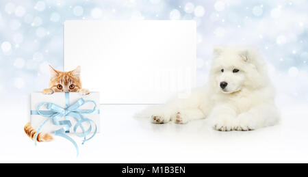 gift card, dog and cat with package on christmas lights background, banner copy space template - Stock Photo