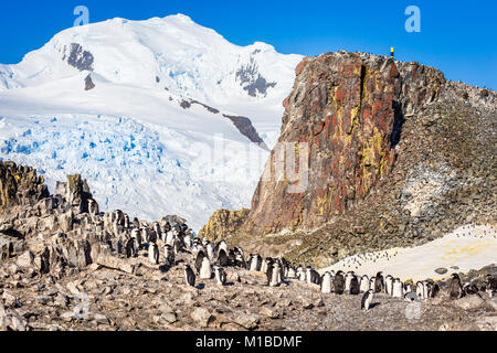 Large flock of chinstrap penguins standing on the rocks with snow mountain in the background, Half Moon island, - Stock Photo