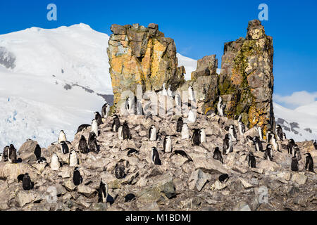 Flock of chinstrap penguins standing on the rocks with snow mountain in the background, Half Moon island, Antarctic - Stock Photo