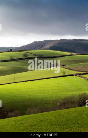 Rolling fields Devon,Dartmoor National Park,meadow, pasture, paddock, green, pen, grassland, pastureland, sward,teign - Stock Photo