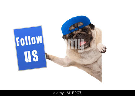 frolic pug puppy dog with cap, holding up blue follow us sign, hanging sideways from white banner, isolated - Stock Photo