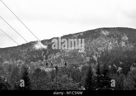 Fog and mist over the pine mountain forest with power lines. Black and white. Monochrome. - Stock Photo