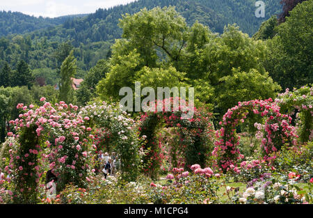 Rosenneuheitengarten in Baden-Baden - Stock Photo