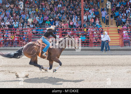 Horse and rider race to the finish line at a barrel racing competition during the 90th Williams Lake Stampede. - Stock Photo