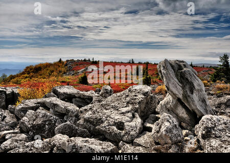Dolly Sods heath land in brilliant red autumn color West Virginia - Stock Photo