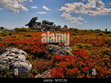 Dolly Sods Wilderness in autumn reds West Virginia - Stock Photo