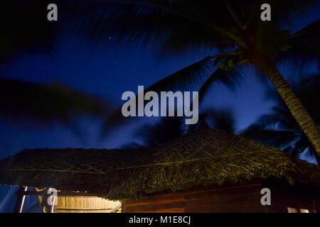Long exposure of palm trees during the night in Vietnam. Palms looks absolutely black in front of the night blue - Stock Photo