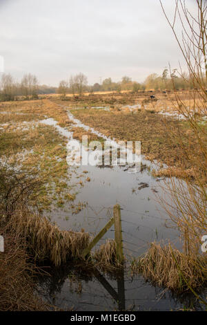 Flooded watermeadows, A33 Reading UK - Stock Photo