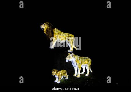 life size Lion family lanterns Chester zoo UK 2016 - Stock Photo