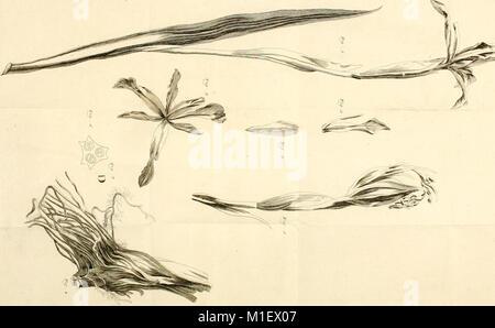 Acta Academiae scientiarum imperialis petropolitanae (1781) (16583572080) - Stock Photo