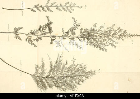 Acta Academiae scientiarum imperialis petropolitanae (1782) (16583498750) - Stock Photo
