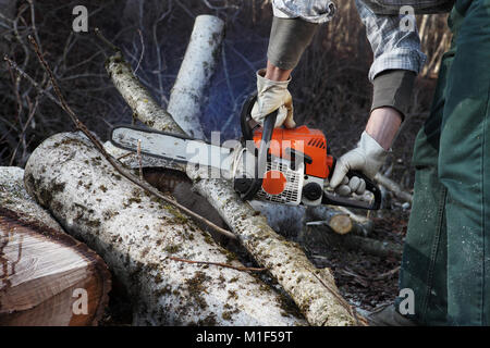Lumberjack using chainsaw cutting big tree during the autumn close up - Stock Photo