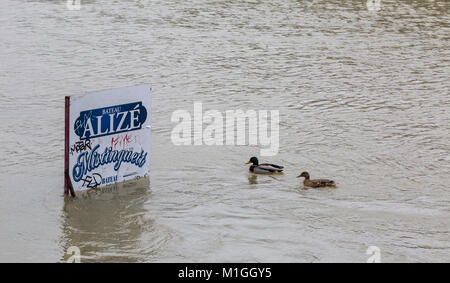 PARIS,FRANCE - January 29, 2018: Two ducks floating in the vicinity of a pole with an ad display on the Seine River - Stock Photo