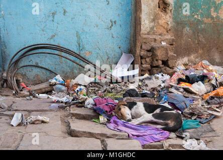 Varanasi, India – March 14 2017: Abandoned homeless Dog sleeping on a pile of garbage wastes at the streets of Varanasi - Stock Photo
