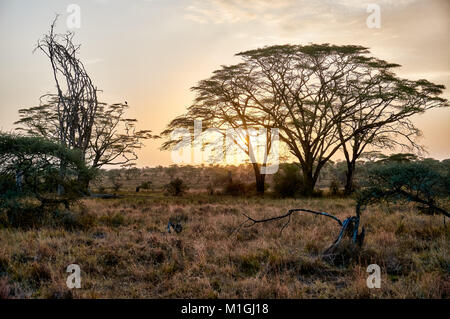 sunrise in Serengeti National Park, UNESCO world heritage site, Tanzania, Africa - Stock Photo