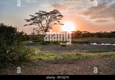 sunrise in Serengeti National Park, UNESCO world heritage site, Tanzania, Africa - Stock Photo