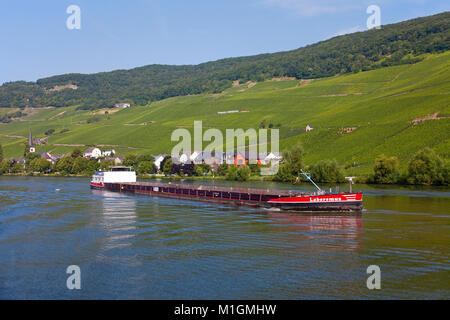 Freighter on Moselle river at wine village Piesport, Moselle river, Rhineland-Palatinate, Germany, Europe - Stock Photo