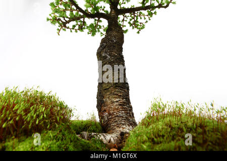 Fir tree in the middle of nature with branches and grass green - Stock Photo