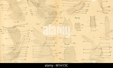 Acta Soc. pro Fauna et Flora Fennica (1921) (16584688540) - Stock Photo