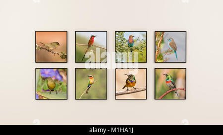 A wall of photographs of African birds - Stock Photo