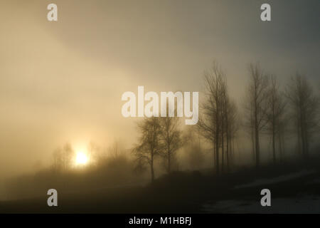 A picture of some trees on a small hill standing in the morning mist. Look mysterious and enigmatic. - Stock Photo