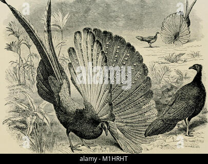 A veteran naturalist - being the life and work of W.B. Tegetmeier (1916) (14597153098) - Stock Photo