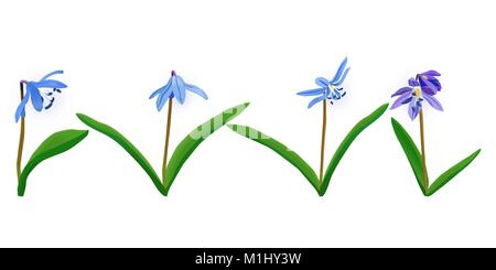 set of vector blue spring flowers Squill, scylla. Elements for creating your design. - Stock Photo