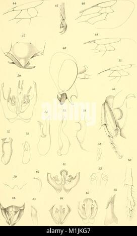 Annalen des Naturhistorischen Museums in Wien (1906) (18201477341) - Stock Photo