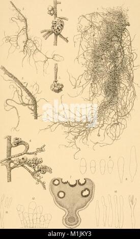 Annalen des Naturhistorischen Museums in Wien (1897) (18200215015) - Stock Photo