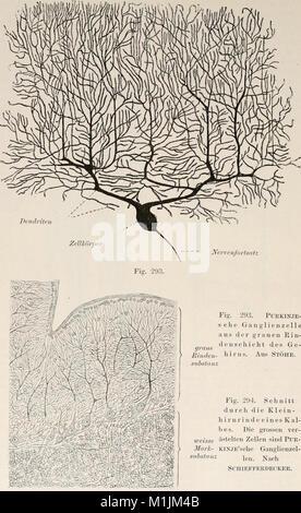 Allgemeine Physiologie. Ein Grundriss der Lehre vom Leben (1901) (18107023542) - Stock Photo