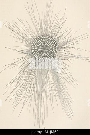 Allgemeine Physiologie; ein Grundriss der Lehre vom Leben (1909) (17489172043) - Stock Photo