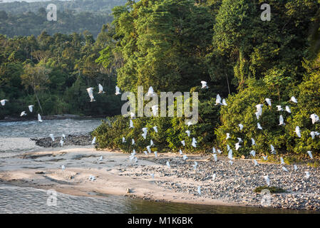 Amazonian rainforest. Misahualli River. Napo province, Ecuador - Stock Photo