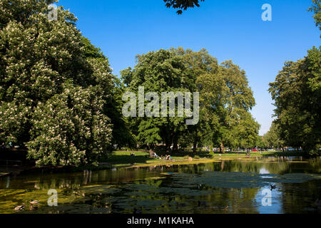 Germany, Cologne, pond at the Theodor-Heuss-Ring near the square Ebertplatz.  Deutschland, Koeln, Weiher am Theodor - Stock Photo